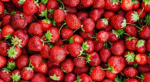 Stabilne ceny truskawek na Giełdzie Goławin