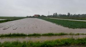 Gm. Igołomia-Wawrzeńczyce: Ulewny deszcz zniszczył uprawy warzyw (zdjęcia)