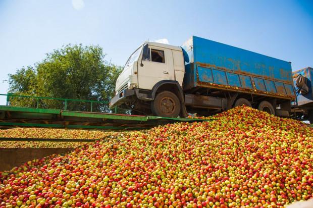 Mazowieckie: Na DK 50 w Mszczonowie z naczepy ciężarówki wysypały się jabłka