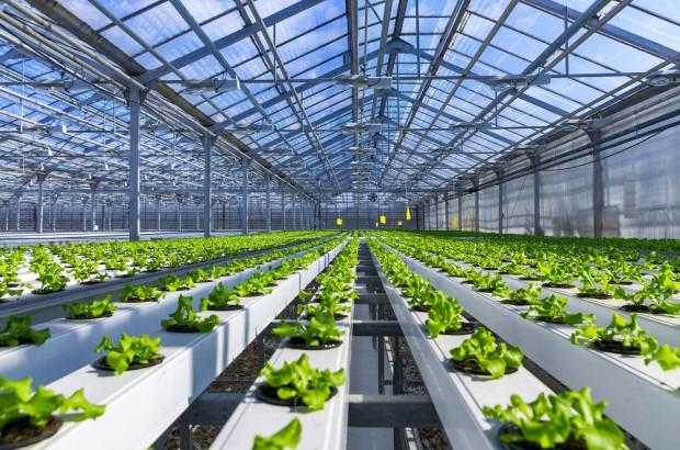 Czy w produkcji nowalijek wykorzystuje się nowe metody uprawy?