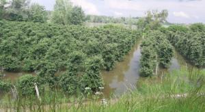 Ardanowski zapewnia: będzie pomoc dla rolników dotkniętych podtopieniami