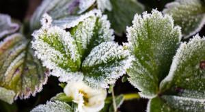 Zimny czwartkowy poranek. Temperatura spadła do minus 3 stopni