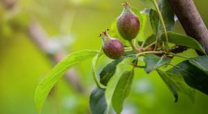 GUS ocenił stan upraw ogrodniczych w 2019 r.