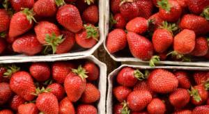 BNP Paribas: Na krajowym rynku może być mniej truskawek, co odbije się na cenie