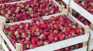 Jak ukształtują się ceny truskawek do przetwórstwa?