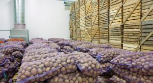 GUS: Mniejsze straty w przechowywanych warzywach niż w ubiegłym roku