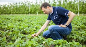 Ochrona truskawek to nie tylko szara pleśń – inne zagrożenia (wideo)
