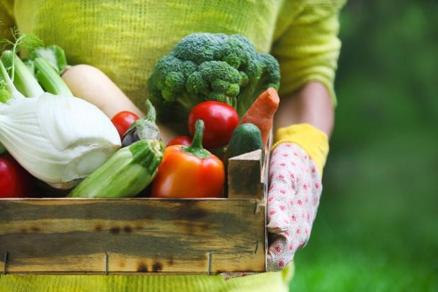 Nowy portal umożliwi rolnikom nawiązać kontakt z osobami, które chcą dla siebie zebrać owoce i warzywa