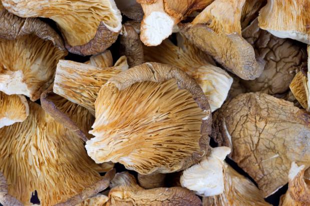 Badacze: Suszone boczniaki stanowią źródło witaminy D
