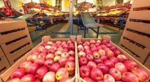 Grójecki Owoc: Przetrwają tylko małe, rodzinne grupy - bo one mają mniejsze koszty własne (wywiad)