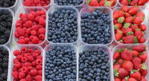 Bronisze: Zwiększa się podaż polskich owoców jagodowych. Wysokie ceny borówek i malin
