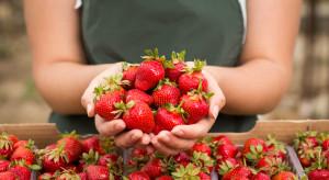 Co wpływa na spadającą popularność pracy tymczasowej w sektorze spożywczym?