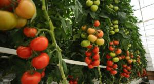 KE przedstawiła perspektywy letniej kampanii pomidorów