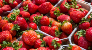 Ceny truskawek w hurcie wahają się między 3-8 zł/kg