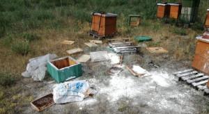 Wielkopolskie: Wandal odpowie za zniszczenie uli