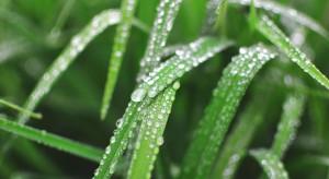 Prognoza pogody: Idą deszcze i burze, lokalnie z gradem