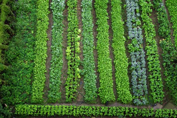 Mniejszy zasięg suszy w przypadku warzyw. Ich ceny będą niższe?
