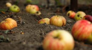 Podstawowym problemem sadowników nadal są relacje z przetwórcami