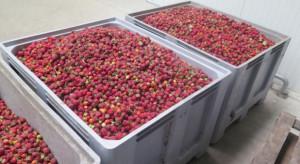 MRiRW apeluje do skupujących owoce: każda dostawa do pierwszego nabywcy wymaga umowy