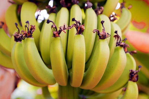 Włochy: krajowe mango, awokado i banany. Efekt zmian klimatycznych