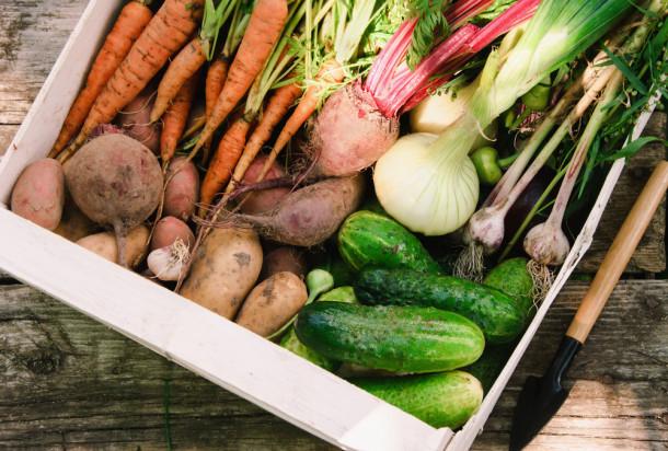 Kalgrup: Potężne pieniądze poszły w sady, ale warzywa zostały zaniedbane (wywiad)