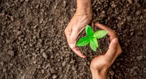 Naukowcy: Sadzenie drzew najskuteczniejszą strategią w walce ze zmianami klimatu