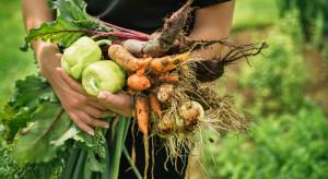 Maleje liczba producentów rolnych wytwarzających ekożywność