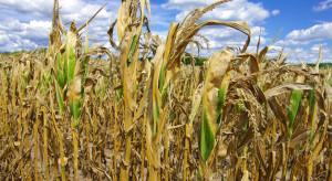 Wielkopolska Izba Rolnicza: poważne straty wskutek suszy w Wielkopolsce