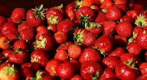Podsumowanie sezonu truskawkowego: Dobre ceny, mniejsze zbiory