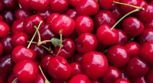 Skup owoców 2019: Wyższe ceny malin, wiśni i czarnych porzeczek