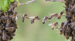 Małopolskie: Ludzie chcą pomóc w odbudowie pasieki, w której wytruto pszczoły
