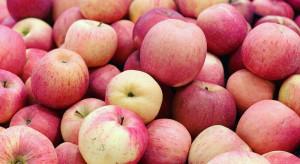 Rosja sprawdza białoruskie jabłka. Embargo zostanie wkrótce zniesione?