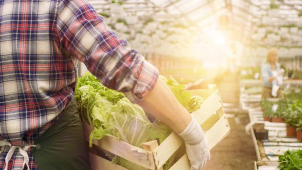 Co piąta osoba szuka wakacyjnej pracy przy zbiorze owoców i warzyw