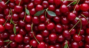 Wiśnia nadwiślanka - co takiego wyjątkowego jest w tym owocu?