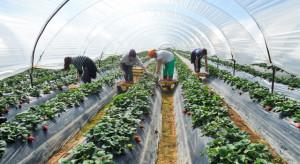 Ukraińcy podejmujący prace sezonowe mogą zarobić nawet 30 zł brutto na godzinę