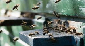 W Rosji masowo giną pszczoły