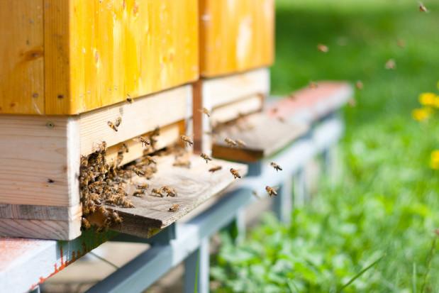 Ule z lokalizatorem GPS. Pszczelarz odzyskał skradzione pszczoły