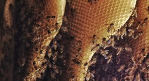 Studenci z Politechniki Gdańskiej opracowali system do obserwacji pszczół w ulu