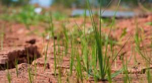 MRiRW o prowadzeniu monitoringu suszy