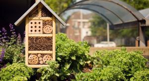 Pszczelarstwo miejskie staje się coraz popularniejsze (wideo)