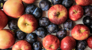 Bronisze: Spadek podaży malin. Coraz więcej śliwek i jabłek letnich