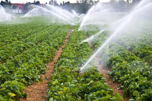 Wody Polskie pracują nad stworzeniem planu przeciwdziałania skutkom suszy (wywiad)