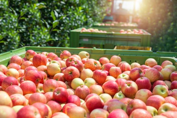 Gaik, Unia Owocowa: Dzisiejsza rzeczywistość jest trudna dla producentów jabłek