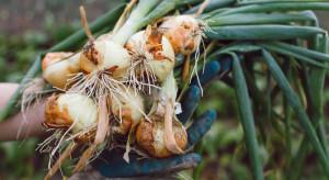 Wielkopolska: Złodzieje chcieli ukraść ziemniaki i cebulę z pola