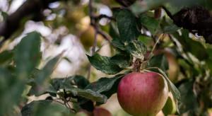 Warto przygotować się na wpływ zmian klimatu na uprawę owoców w Polsce