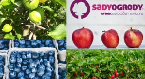 W lipcu portal SadyOgrody.pl odwiedziło 241 tys. unikalnych użytkowników!