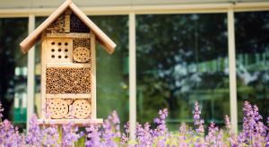We Wrocławiu otwarto hotel dla pszczół