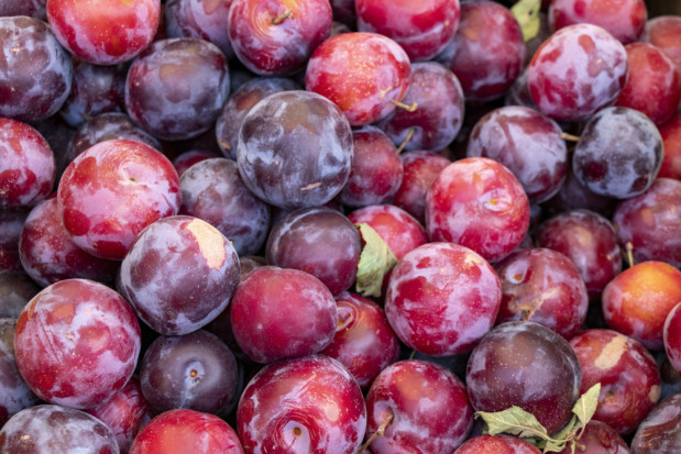 Bronisze: Wciąż brakuje malin. Coraz więcej jabłek i śliwek