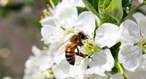 Adiuwanty w połączeniu z pestycydami szkodzą pszczołom?