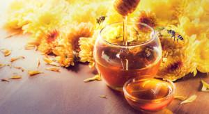 Pszczoły mają wkład w rozwój całego sektora agro. 8.08 obchodzą swoje święto